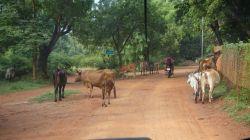 2017-10_Auroville_143